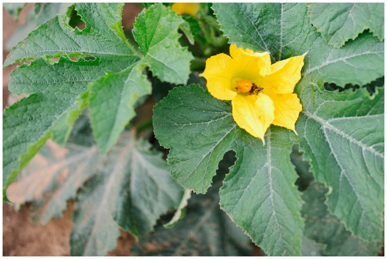 Reimer Farms__Lubbock Texas produce garden_15.jpg