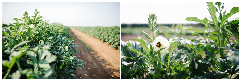 Reimer Farms__Lubbock Texas produce garden_17.jpg