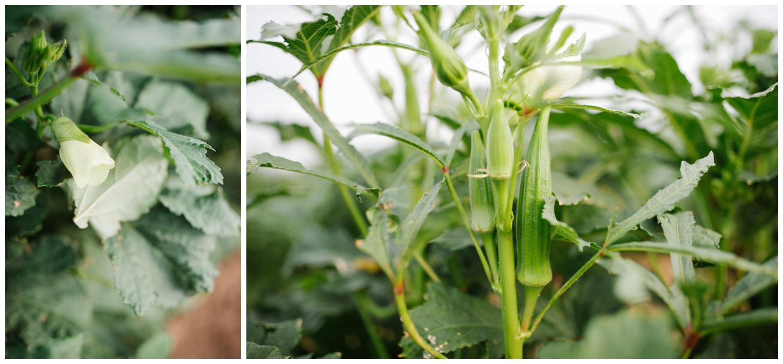 Reimer Farms__Lubbock Texas produce garden_18.jpg