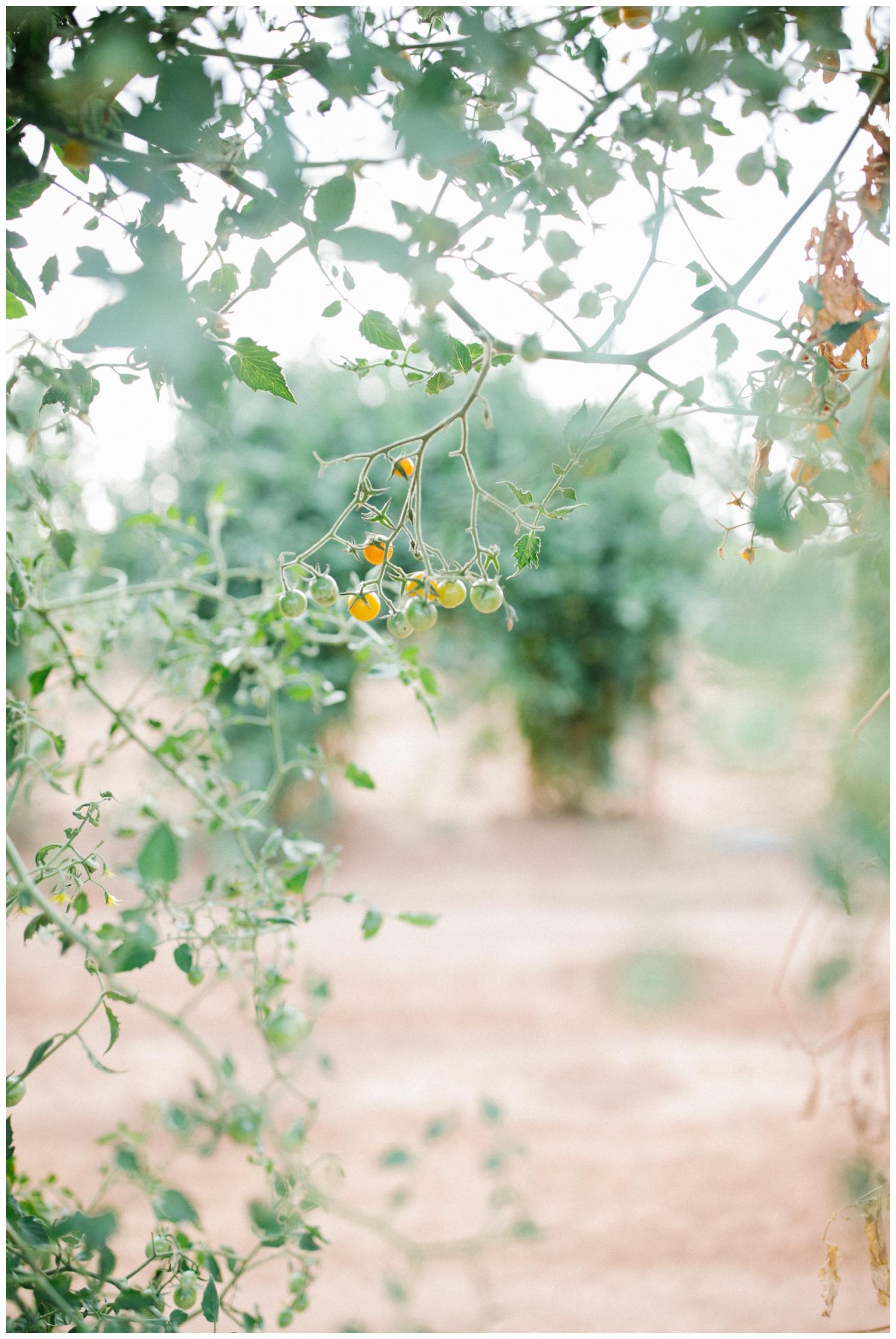Reimer Farms__Lubbock Texas produce garden_28.jpg