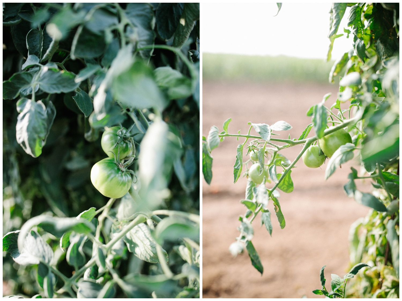 Reimer Farms__Lubbock Texas produce garden_30.jpg