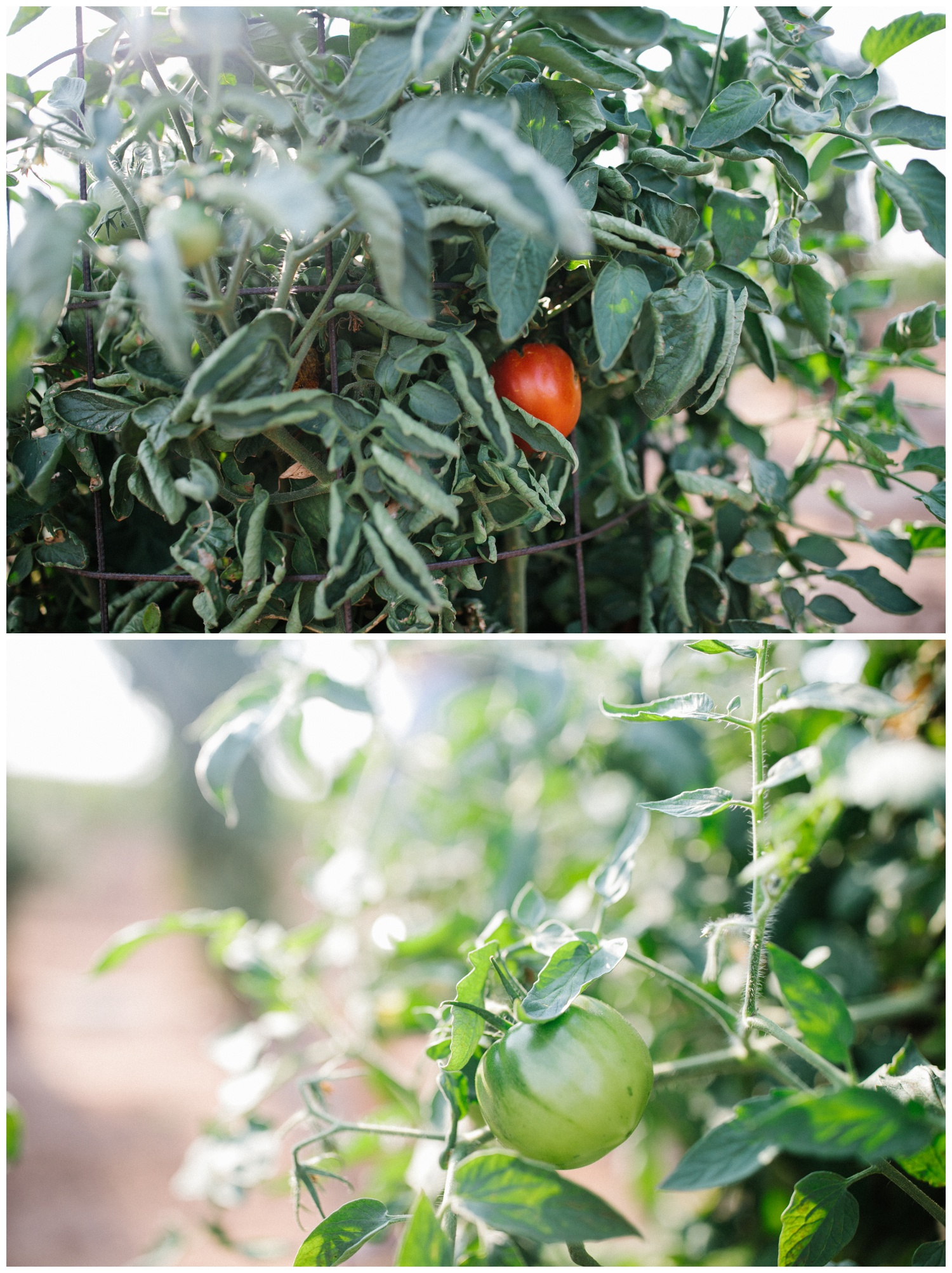 Reimer Farms__Lubbock Texas produce garden_31.jpg