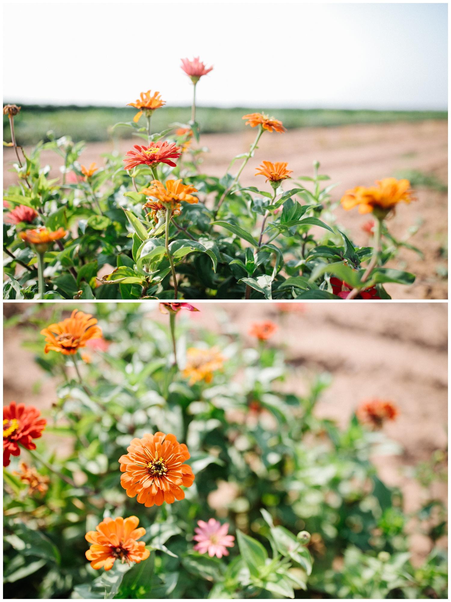 Reimer Farms__Lubbock Texas produce garden_45.jpg