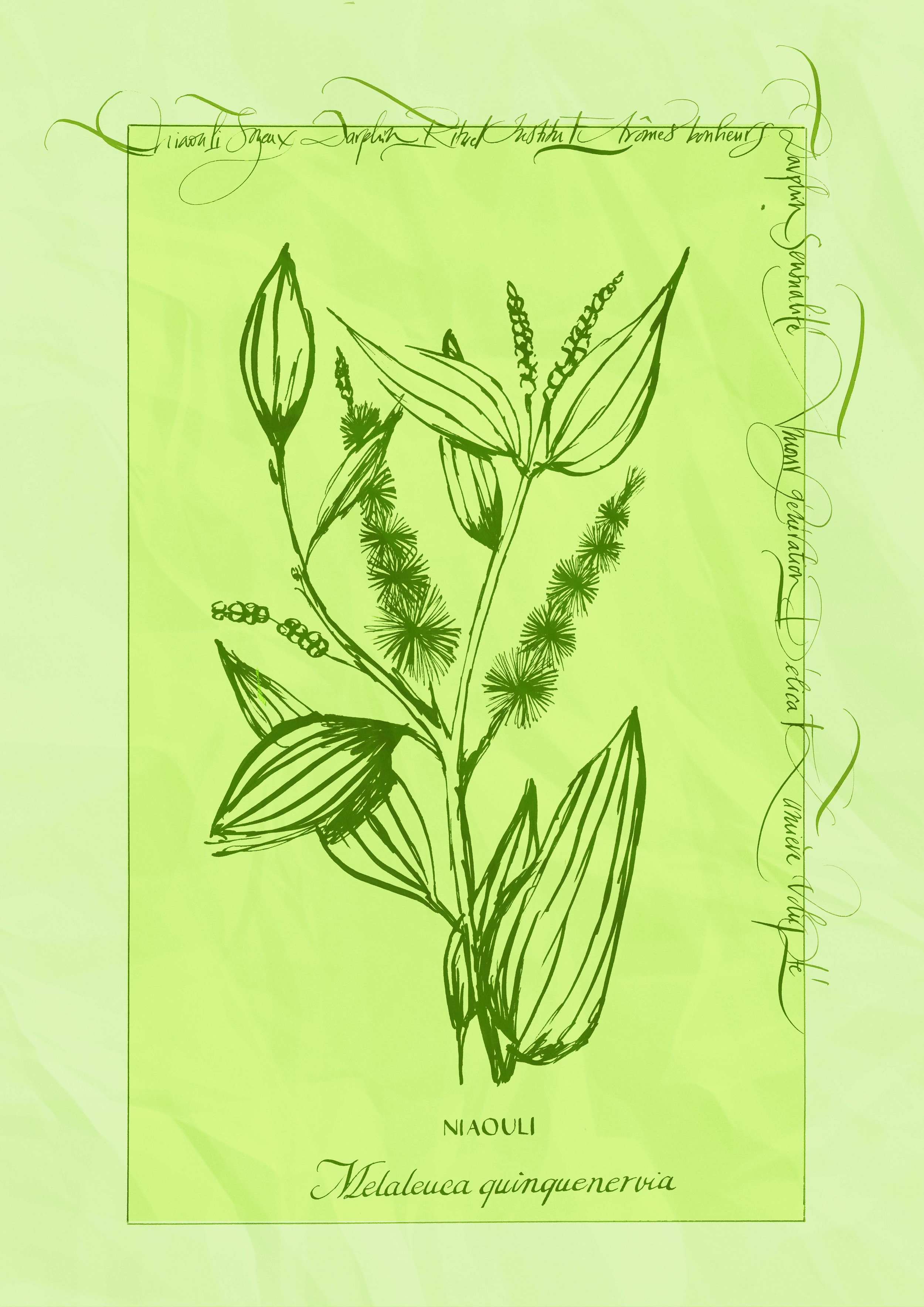 plantes3.jpg