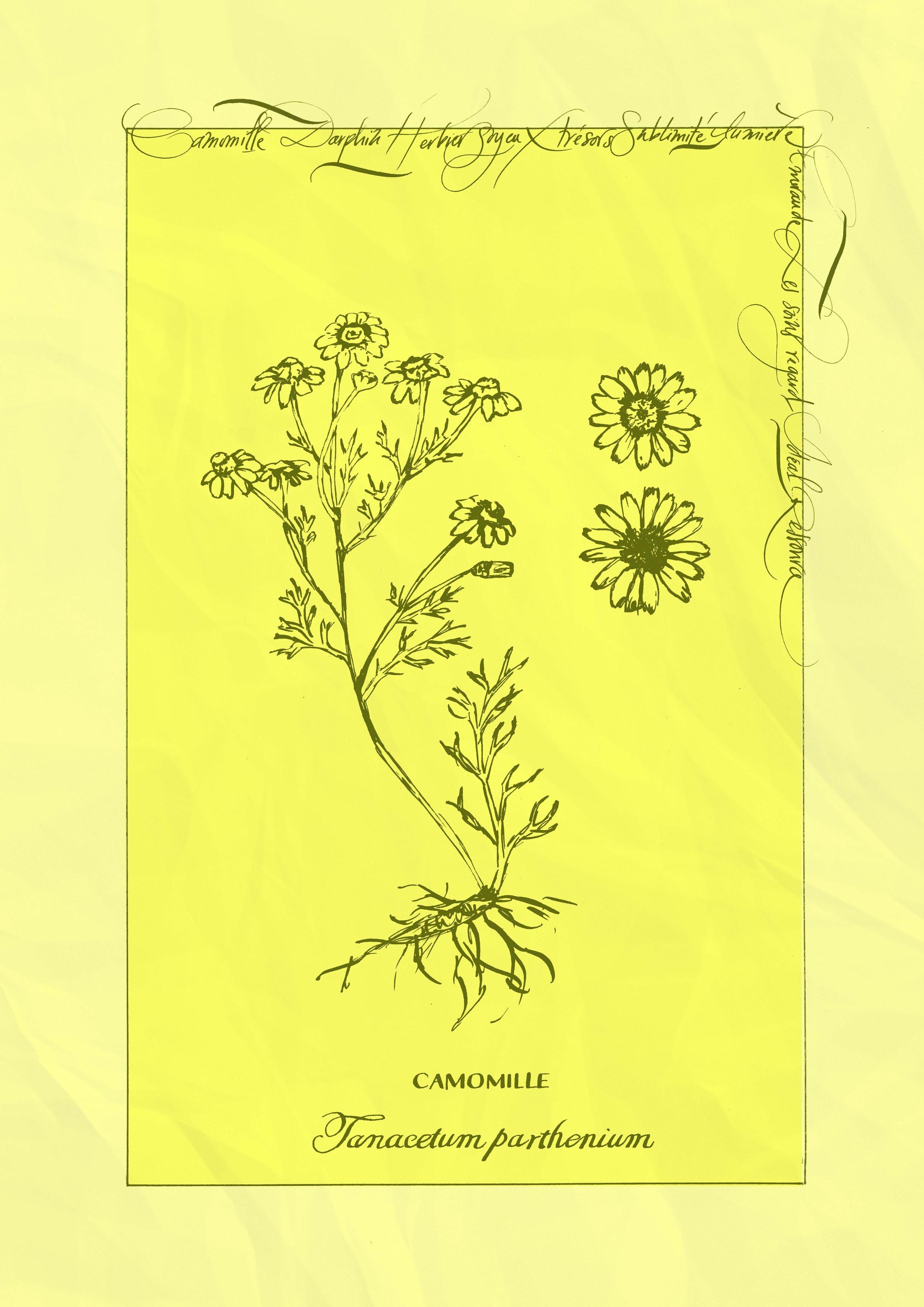 plantes4.jpg