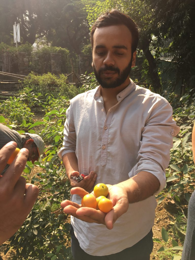 """Lets make a Lodhi sour!"""", laughed Uzair as he grabbed an orange segment from me.  The maalis at Lodhi Garden call them Chinese oranges. We had noticed these in several other government nurseries like the Hauz Rani Forest Nursery, Sunder Nursery & the DDA Qutub Nursery, and at each place they've been grown as ornamental plants. We also realized these weren't being consuming at the rate they fall off. And so we found another secret and easily available fruit!  - Kush  Photo credit: @myunfinishedlyf"""