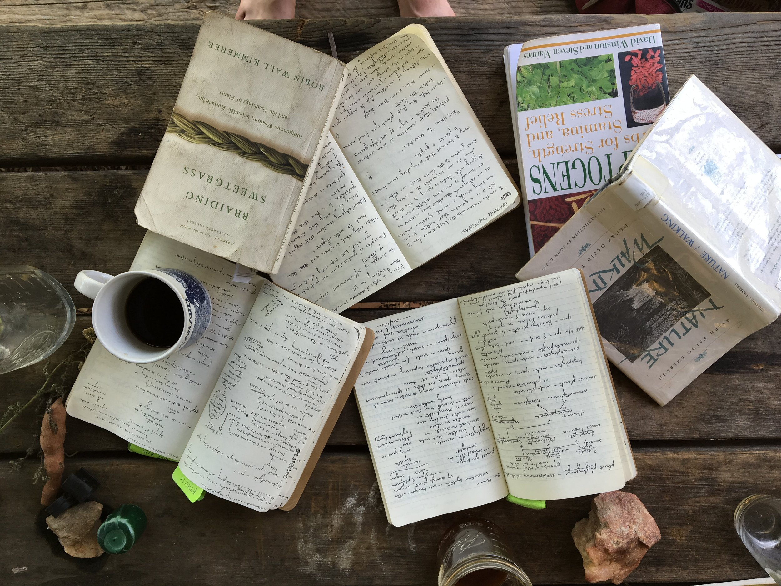 Picnic table prep for a week of teaching at the Blue Ridge School of Herbal Medicine and the Firefly Gathering, North Carolina summer 2016
