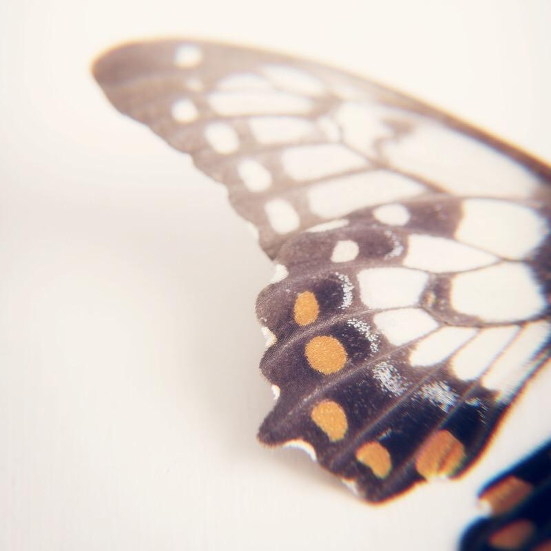 Butterfly Wing.jpg