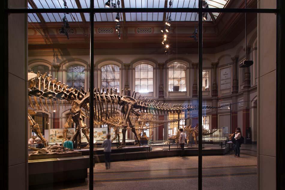 museum naturkunde berlin