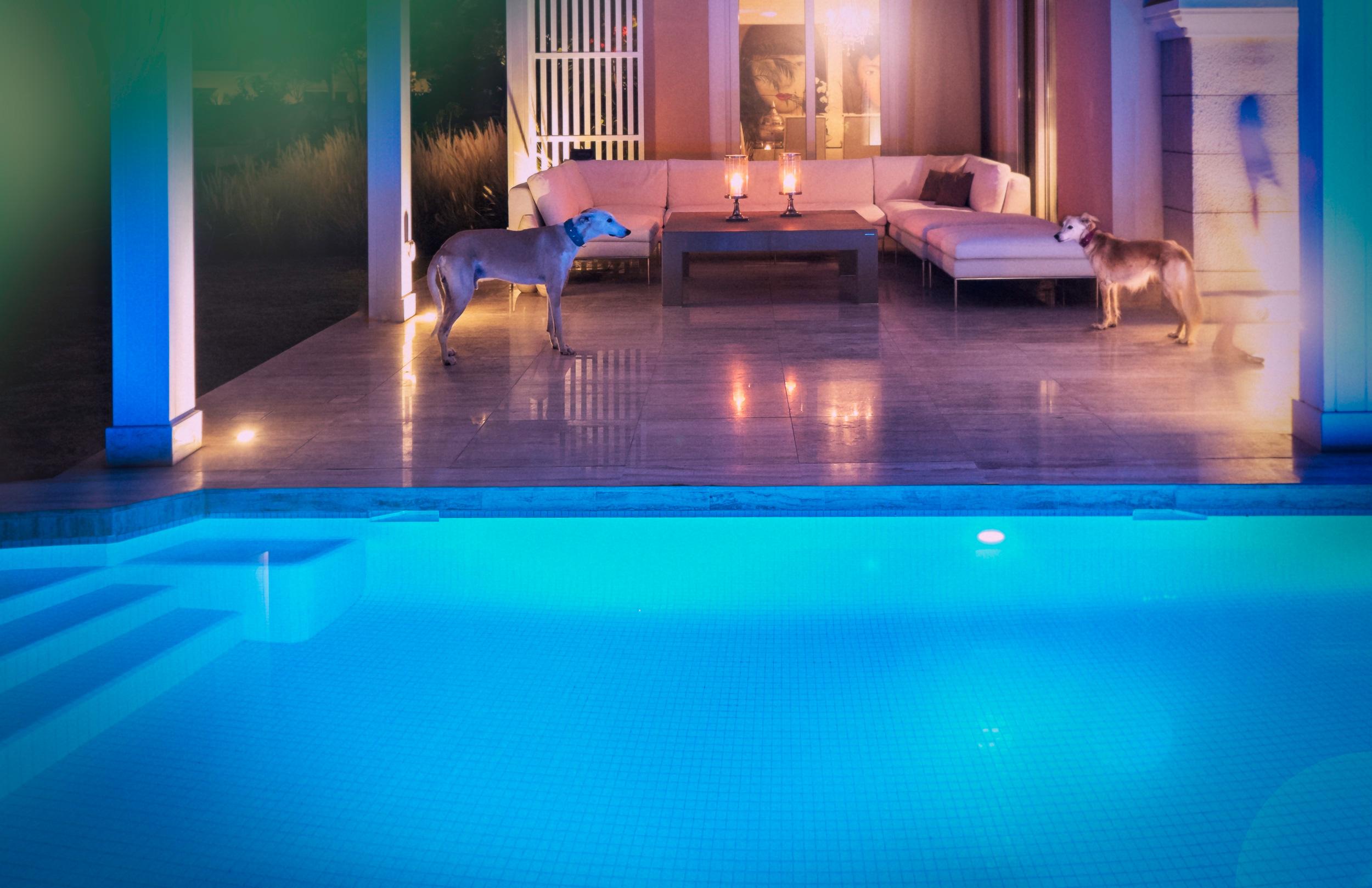 pool-jumeirah-village_dogs.jpg
