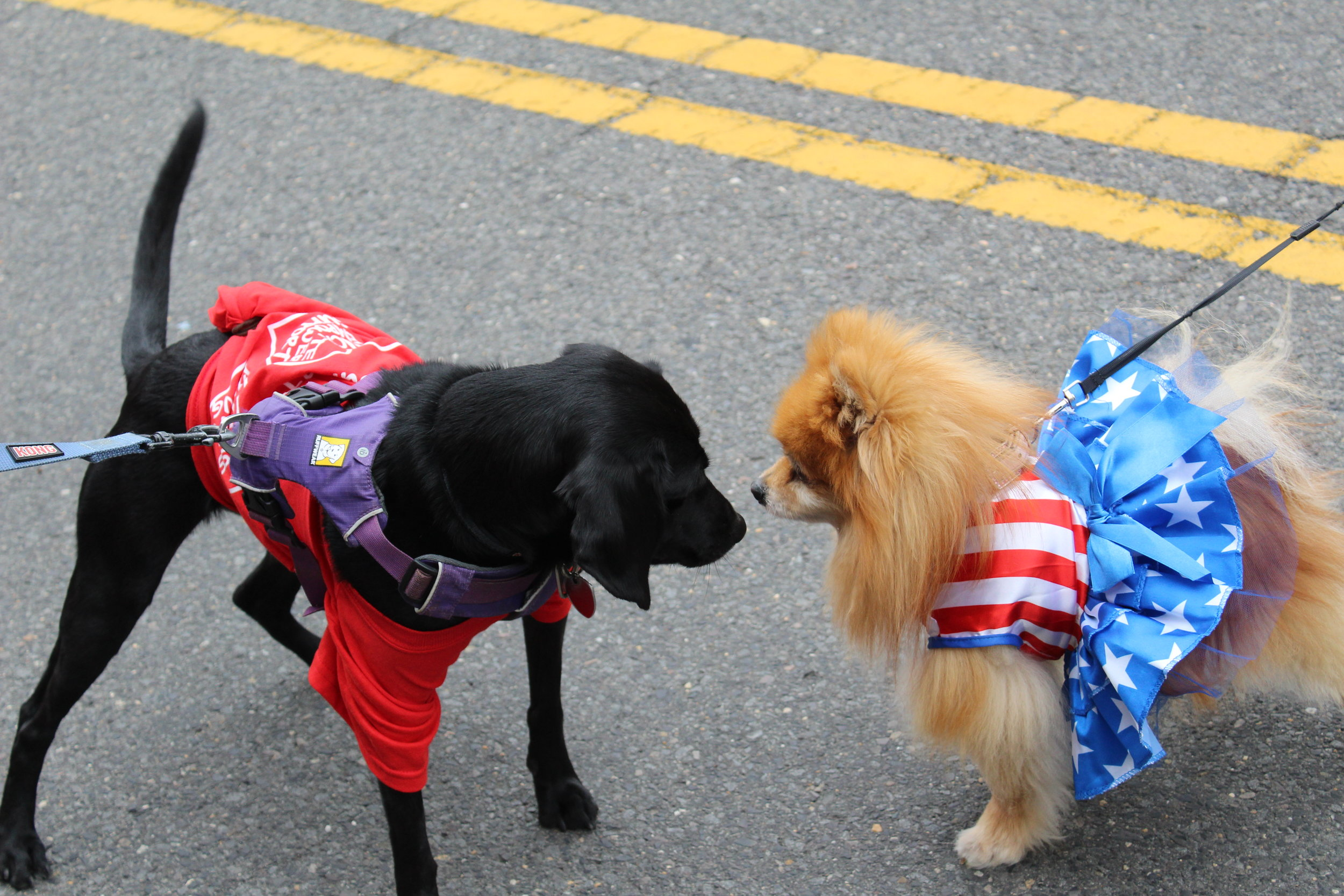 WSTG Dog meets patriotic dog