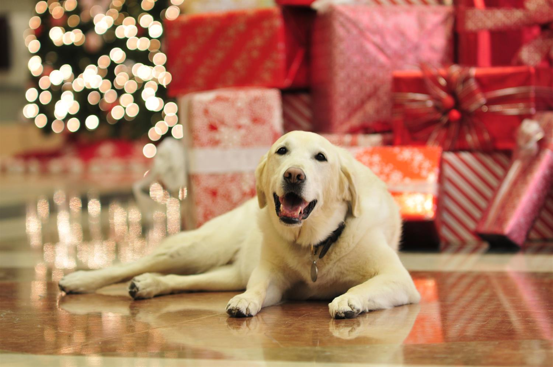 Mavis, the hotel's Canine Ambassador