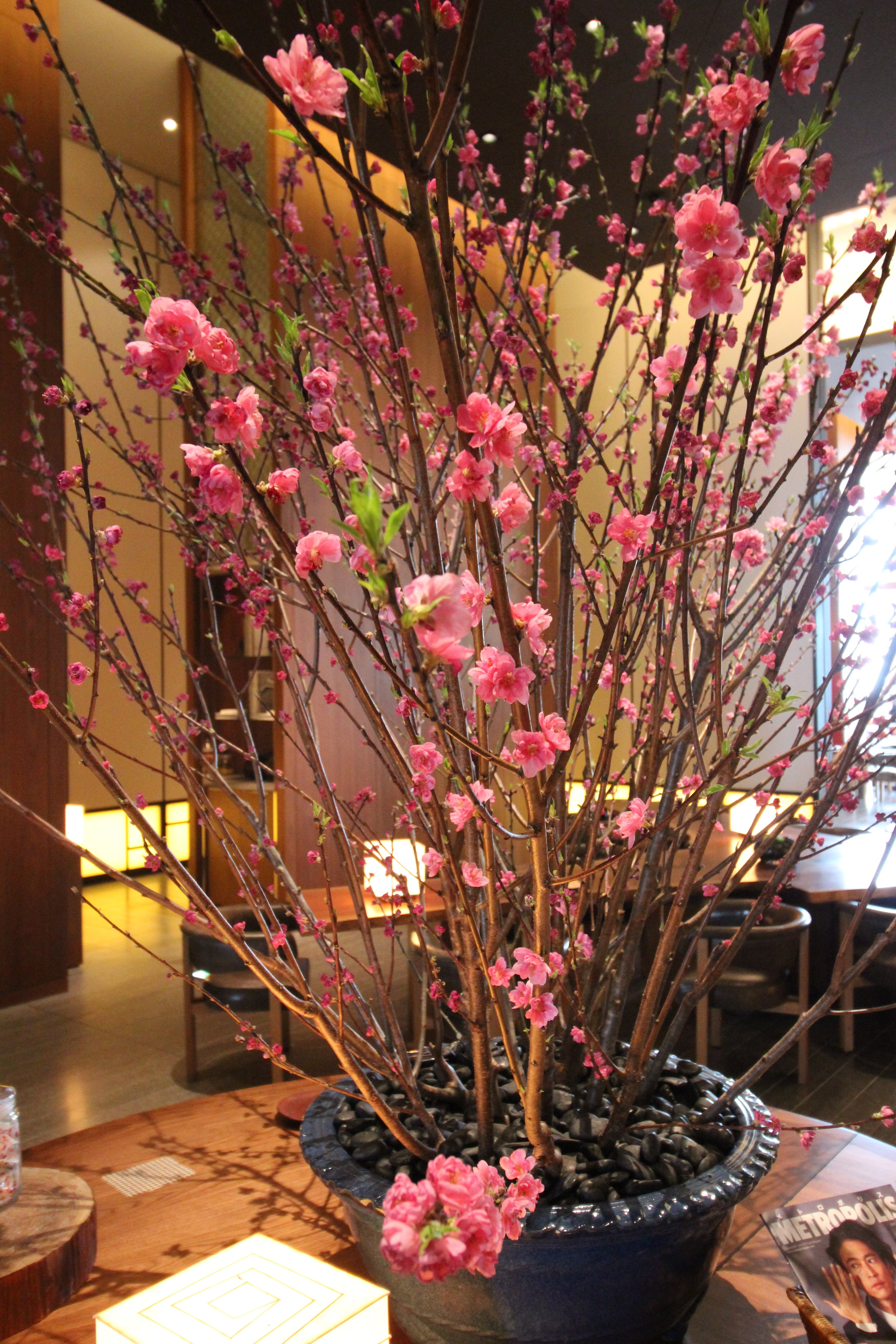 Plum blossoms—just don't ask the concierge where to find them in public.