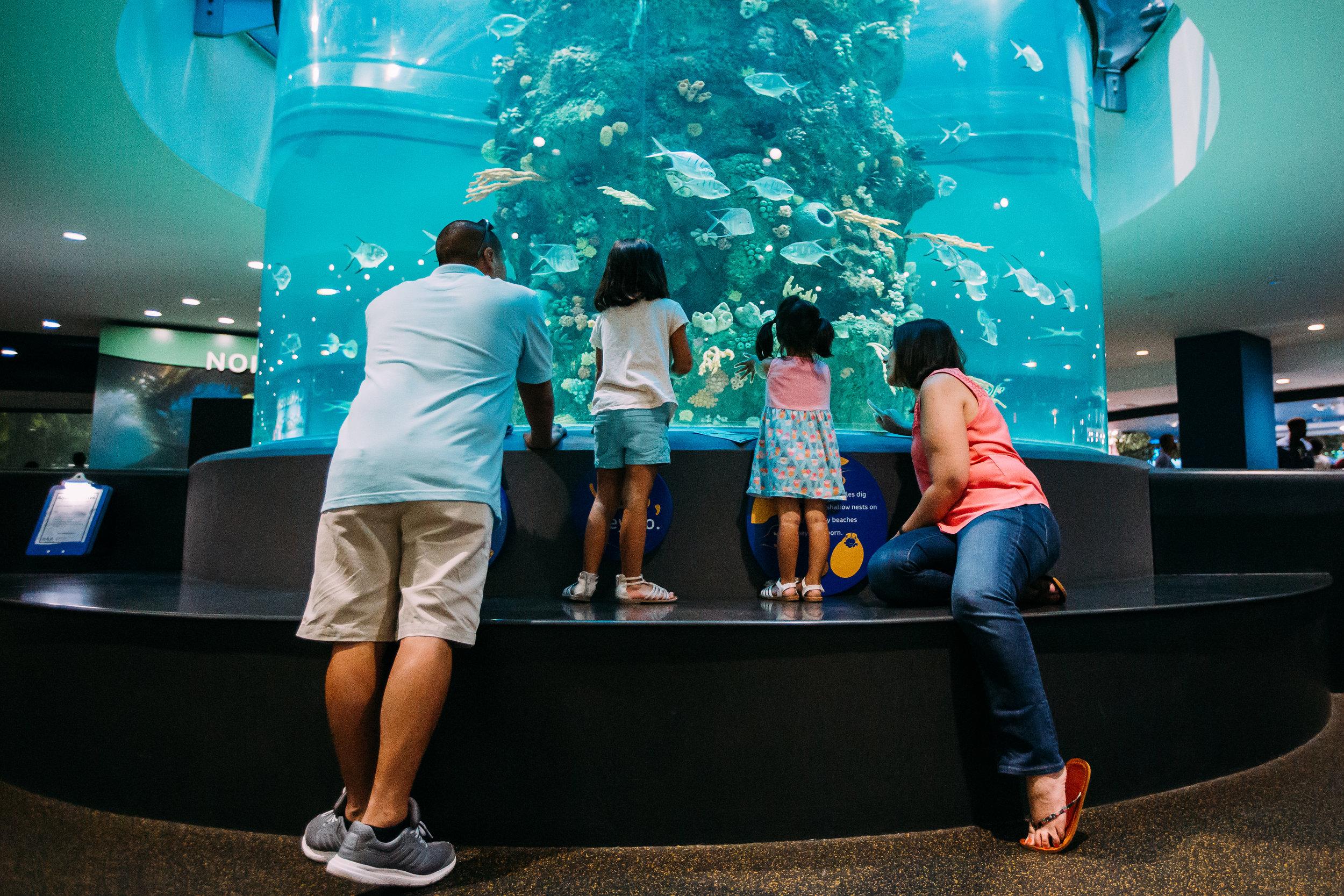 Family of 4 at the aquarium