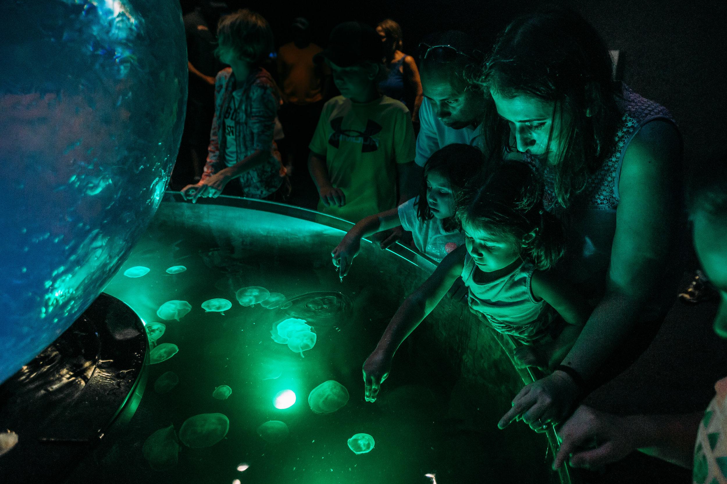 Family petting jelly fish