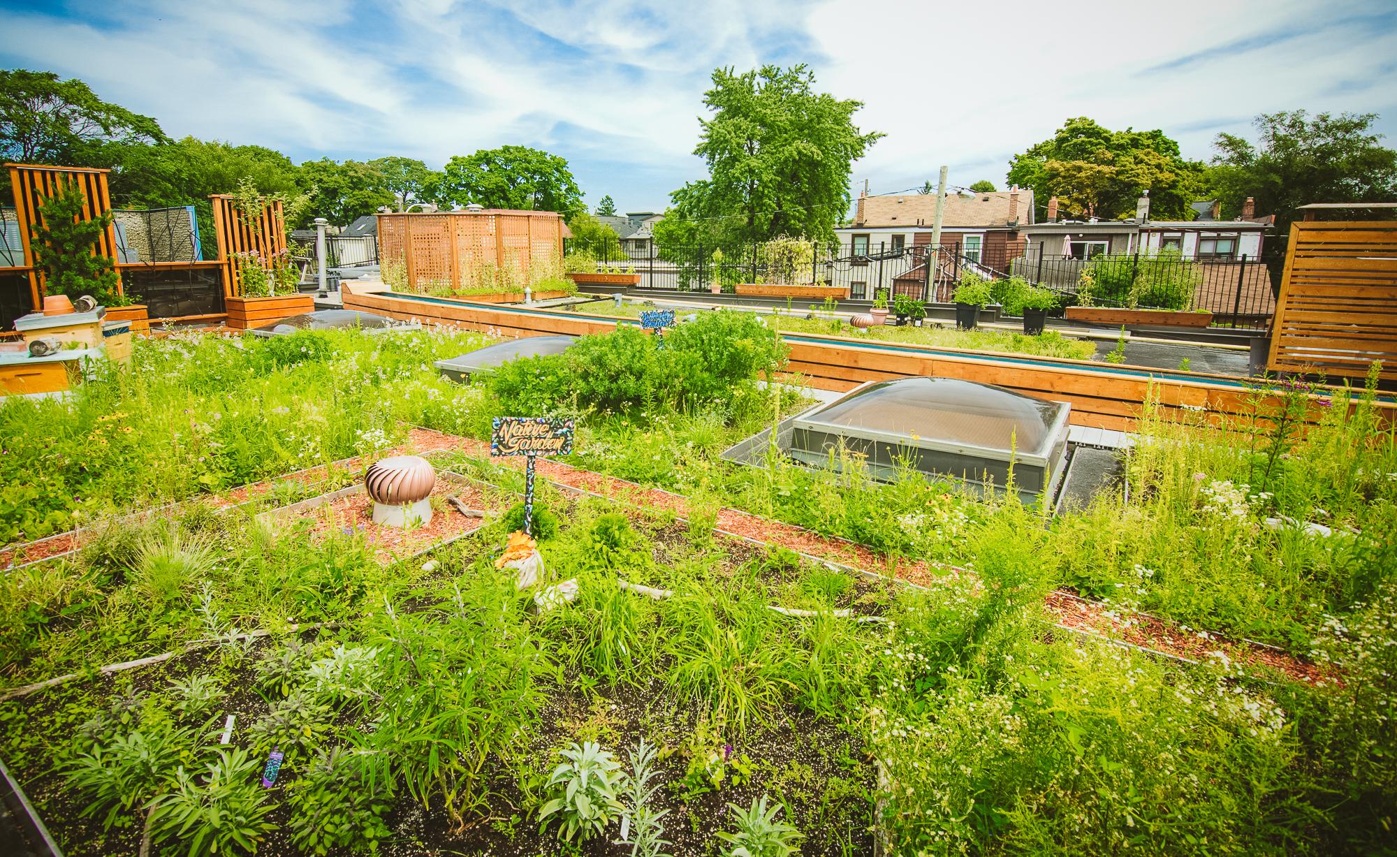 The Big Carrot community garden.