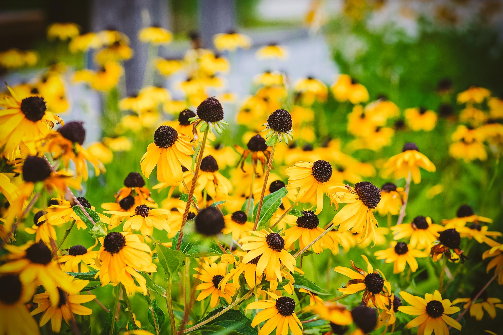 gardens-1563.jpg
