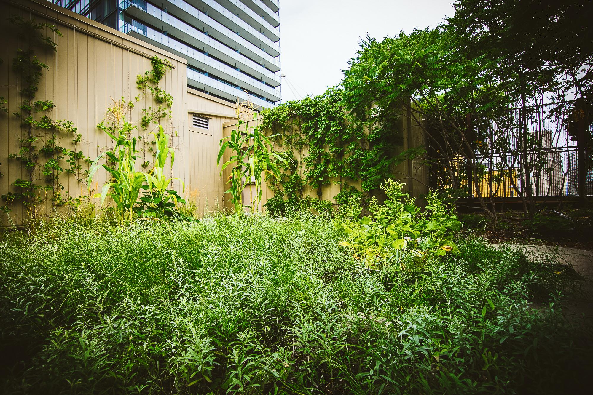 gardens-0656.jpg