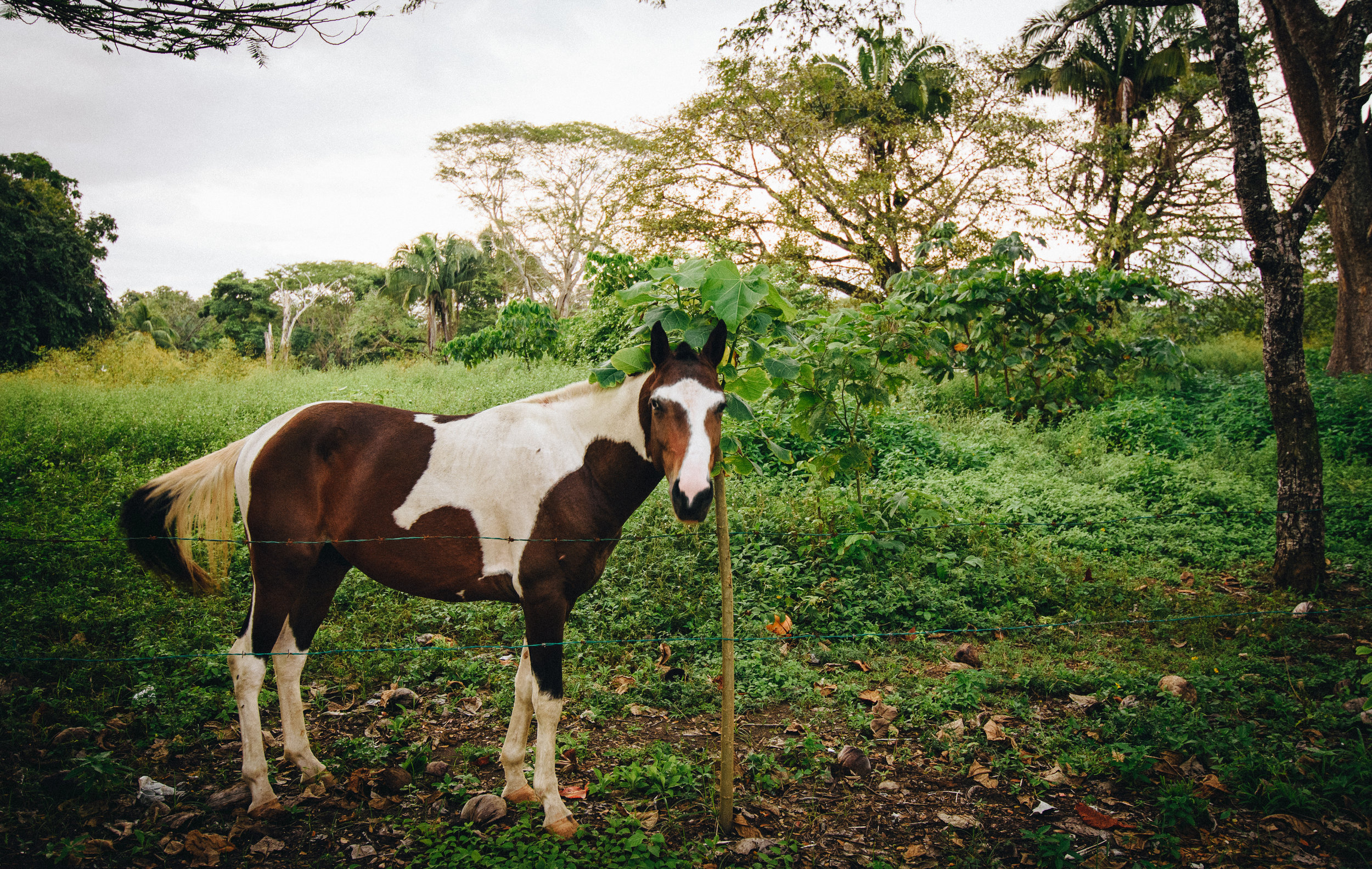 A friendly neighbourhood horse at Esterillos Oeste. She liked to hang around the children's playground.