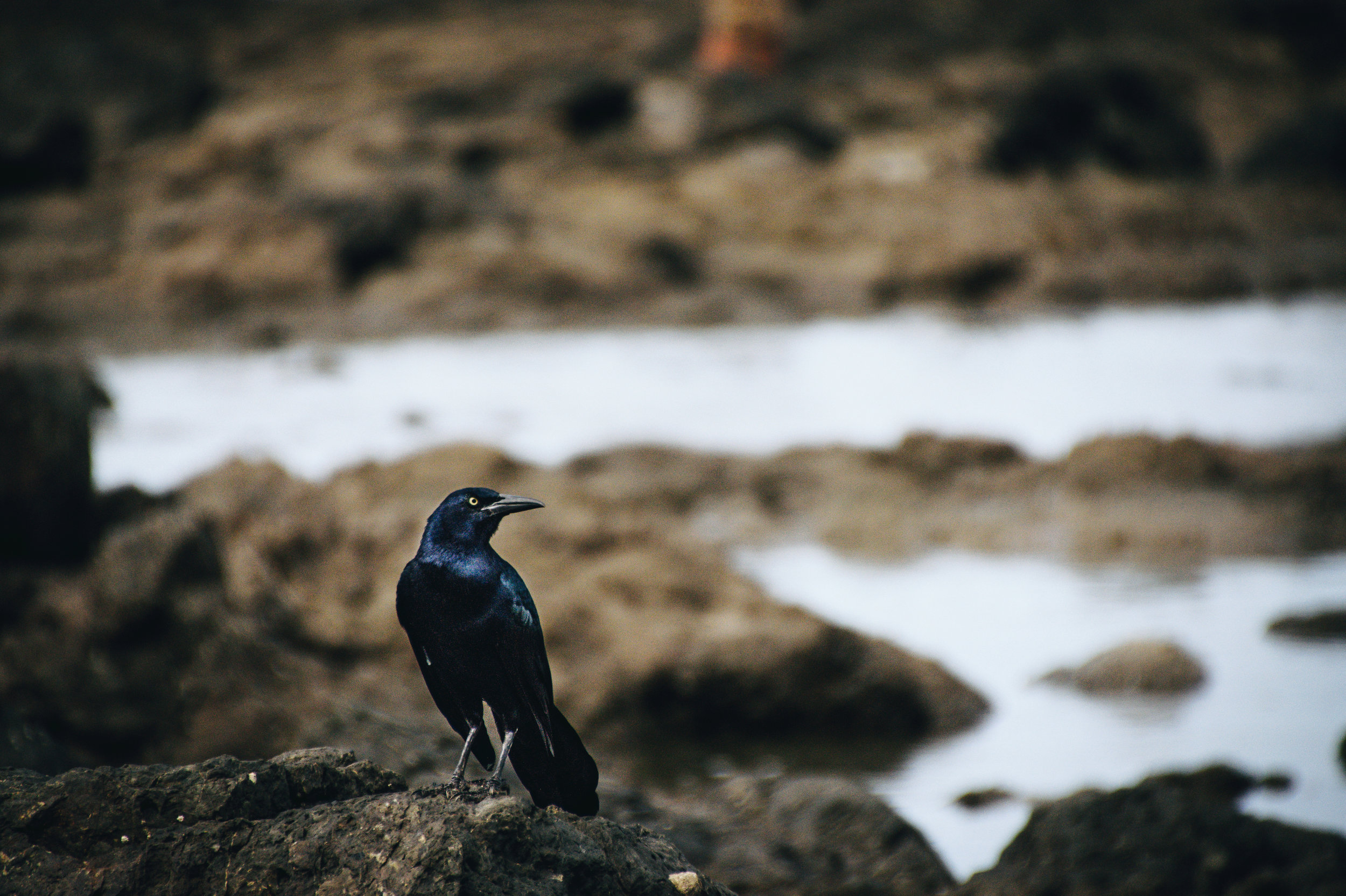 Pretty bird, pretty bird. This little guy hung around with me as I scrambled out to the reef to take surf shots.