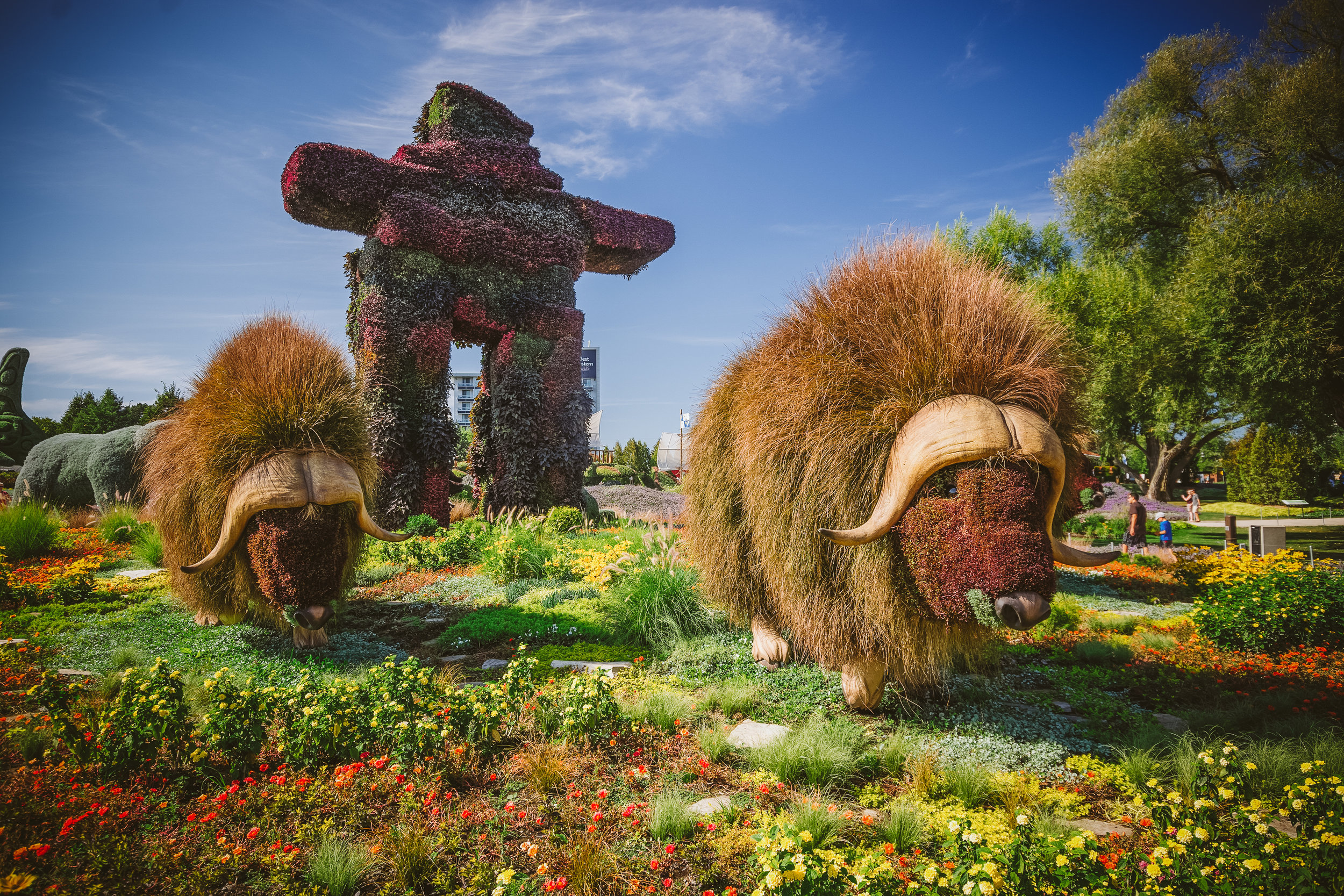 """""""The Muskoxen"""" (Northwest Territories). These were my favourite! So well done."""
