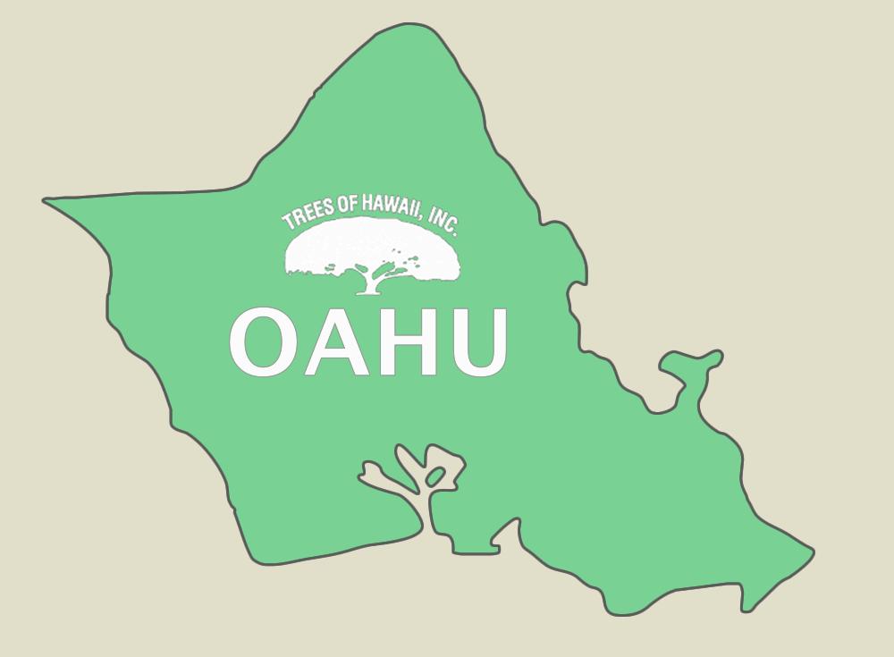 TREES OF HAWAII - OAHU  Honolulu: 808-842-0474 Windward Oahu: 808-235-8090 Leeward Oahu: 808-682-5771