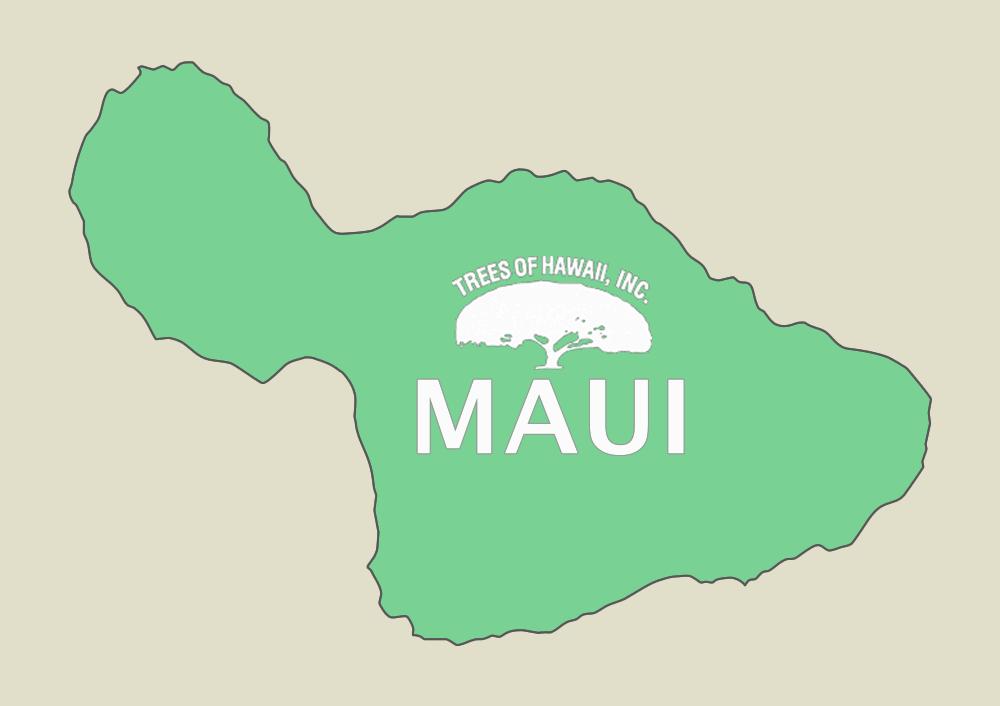 TREES OF HAWAII - MAUI  808-242-9035