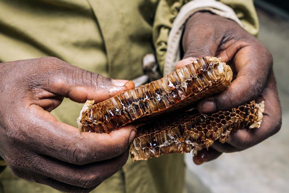 Jungle Bees -