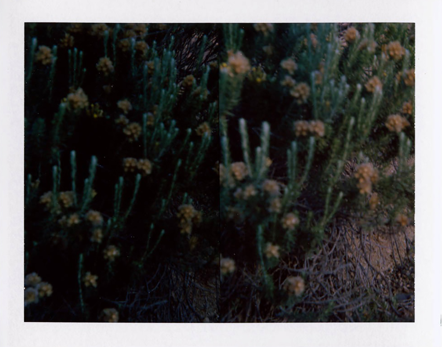 I.D.006, The Polaroid Revolutionary Workers, 2013, Polaroid Picture, 107mm x 86mm