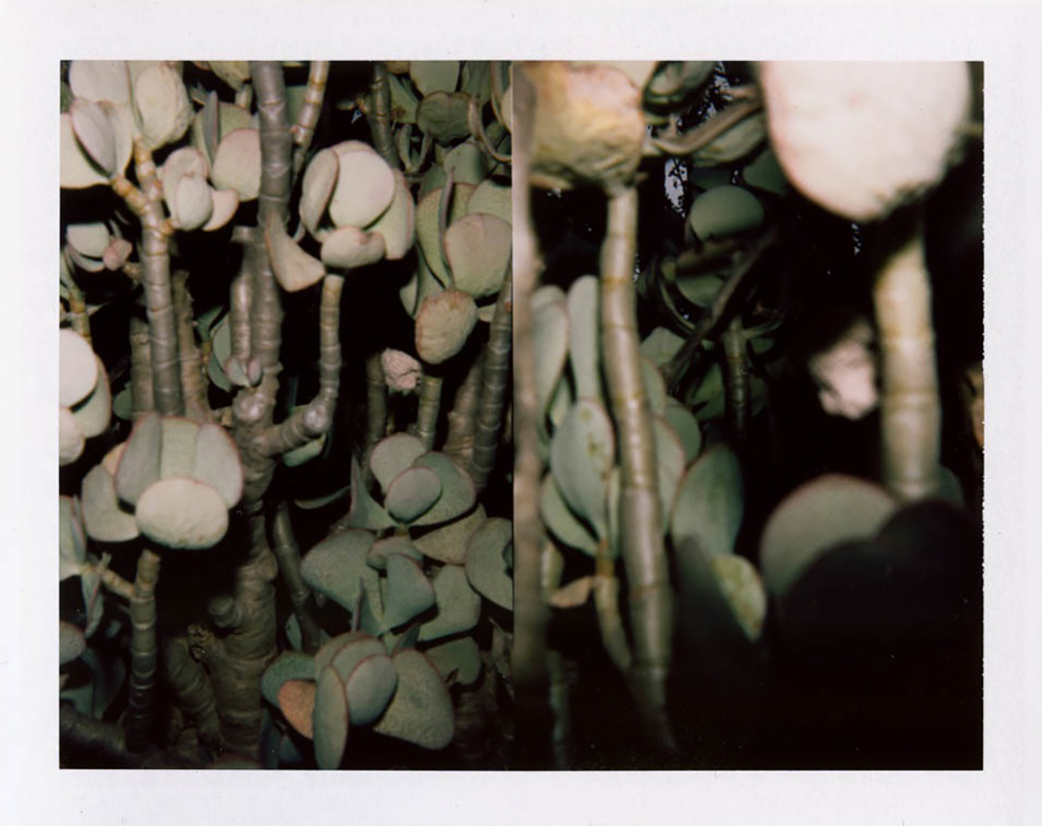 I.D.008, The Polaroid Revolutionary Workers, 2013, Polaroid Picture, 107mm x 86mm