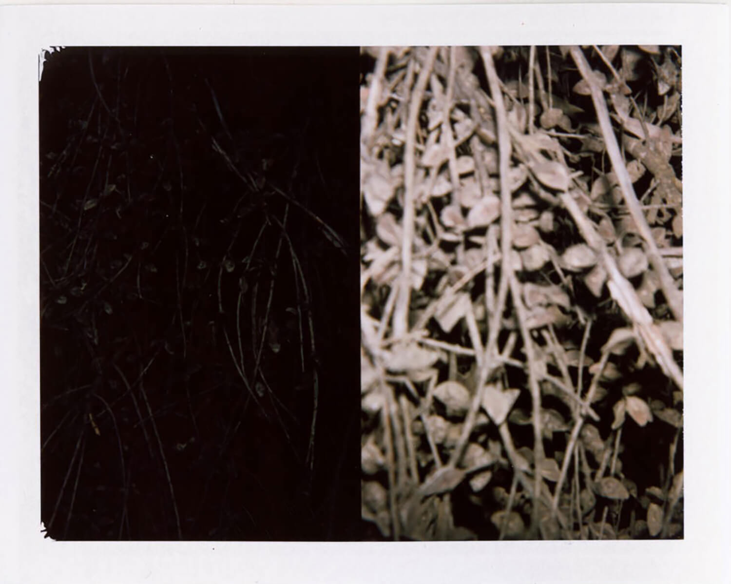 I.D.026, The Polaroid Revolutionary Workers, 2013, Polaroid Picture, 107mm x 86mm