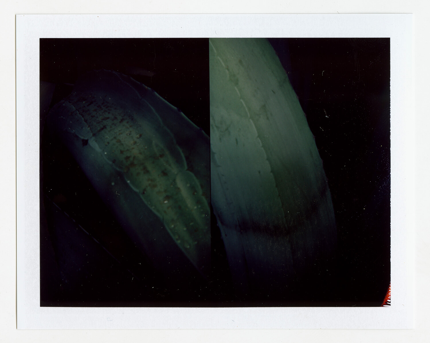 I.D.068, The Polaroid Revolutionary Workers, 2013, Polaroid Picture, 107mm x 86mm