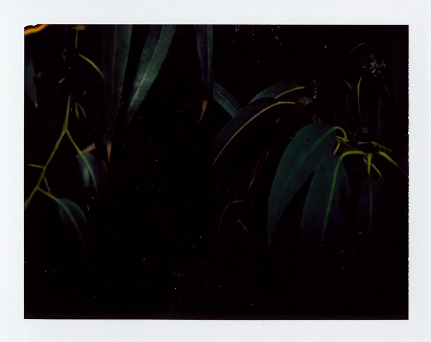 I.D.082, The Polaroid Revolutionary Workers, 2013, Polaroid Picture, 107mm x 86mm