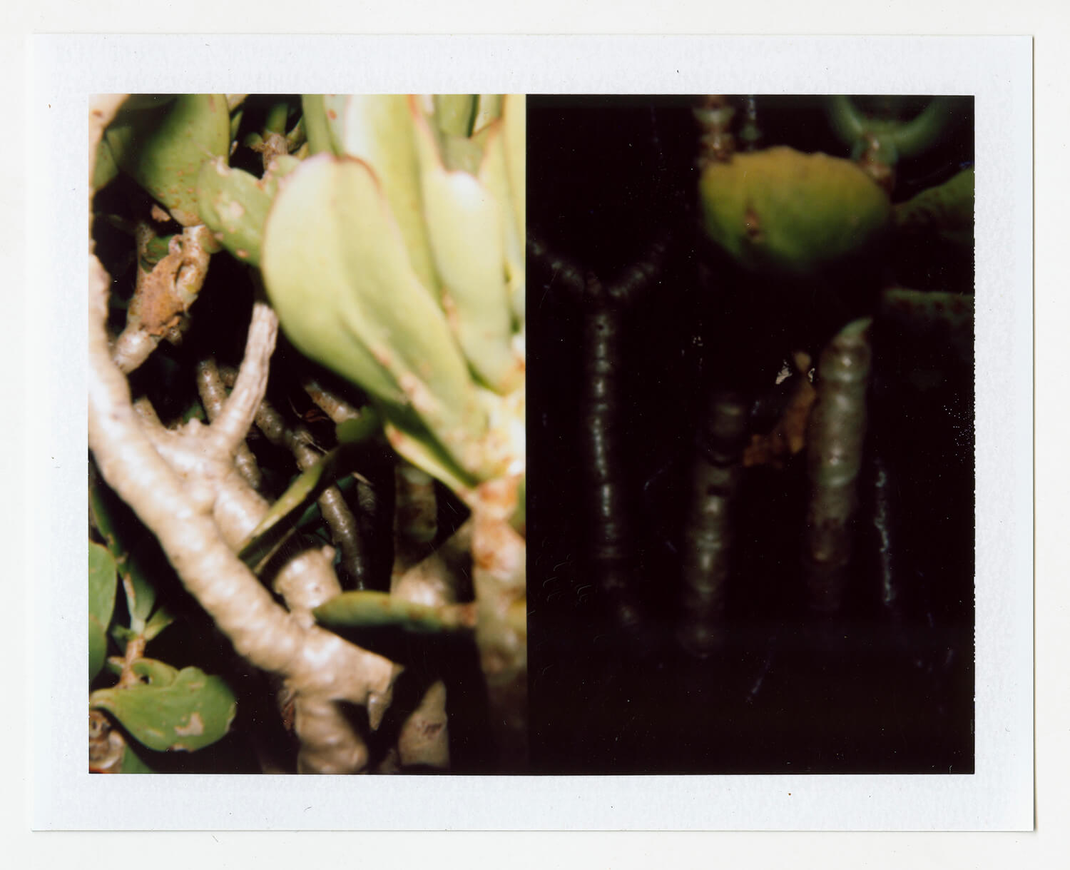 I.D.096, The Polaroid Revolutionary Workers, 2013, Polaroid Picture, 107mm x 86mm
