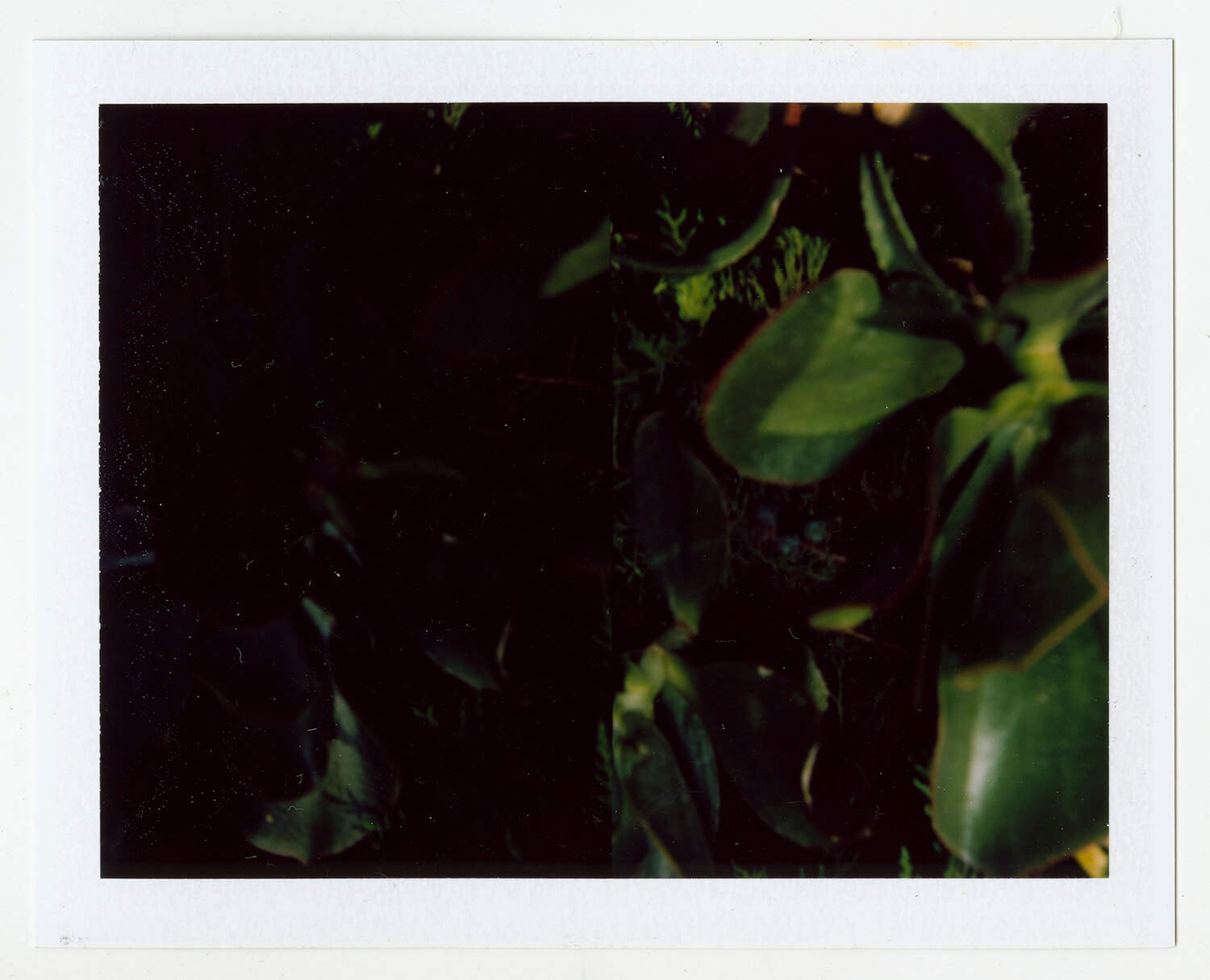 I.D.100, The Polaroid Revolutionary Workers, 2013, Polaroid Picture, 107mm x 86mm