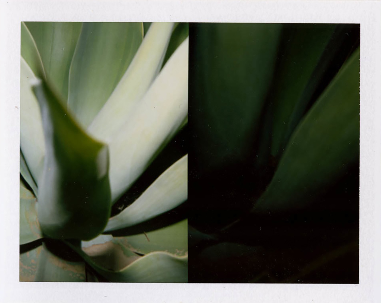 I.D.040, The Polaroid Revolutionary Workers, 2013, Polaroid Picture, 107mm x 86mm