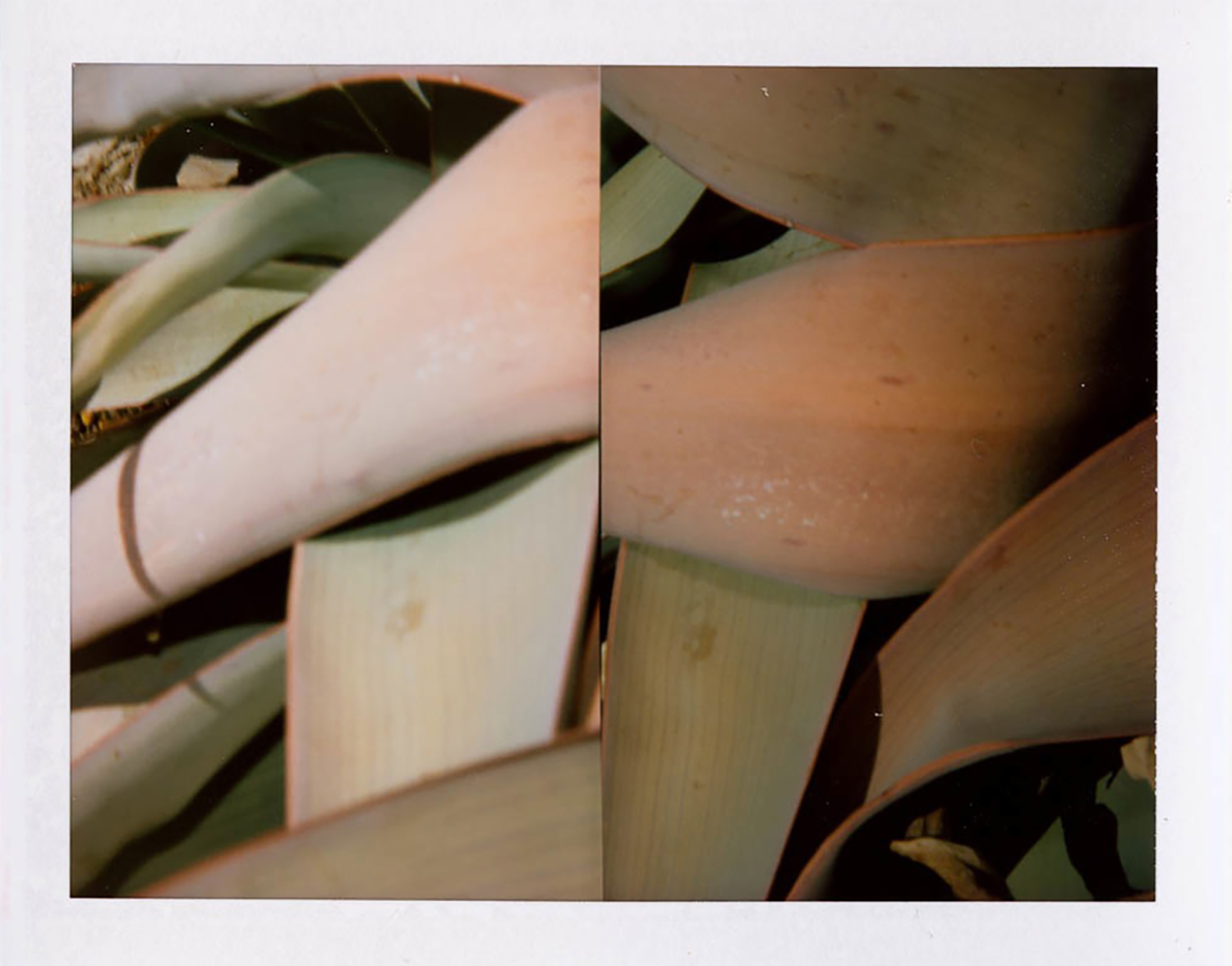 I.D.045, The Polaroid Revolutionary Workers, 2013, Polaroid Picture, 107mm x 86mm