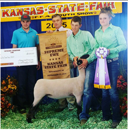 Supreme Champion Ewe   2015 Kansas State Fair    Bred by: Double F Club Lambs    Sired by: #Hashtag    Shown by Shilo Schaake