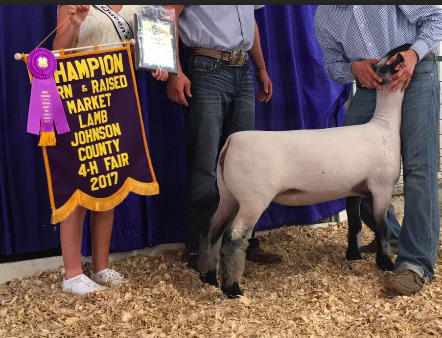 Korbin Heminger - Grand Champion B&B Lamb | Johnson Co. Fair | IN