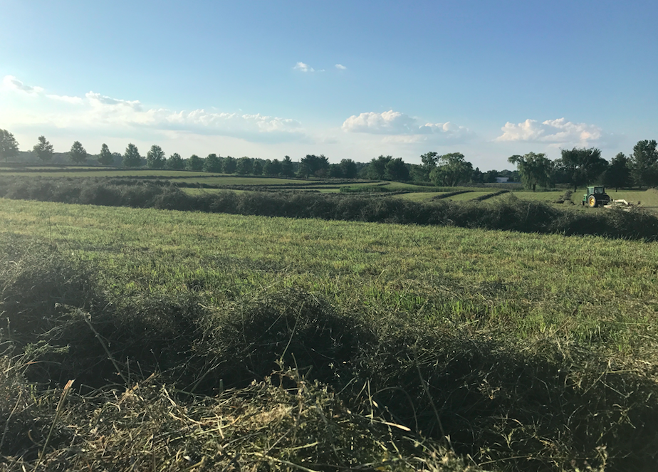 3rd Cutting - Hay season is nearly complete!