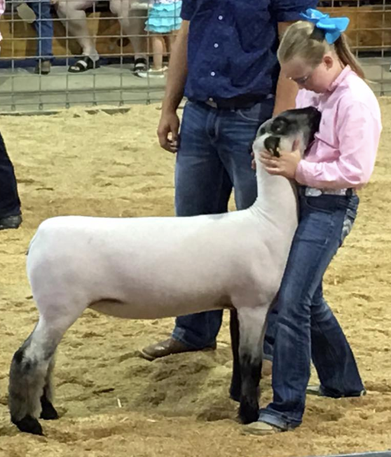 Maddie Hauger - Supreme Champ. Ewe | Rush Co. Fair | IN