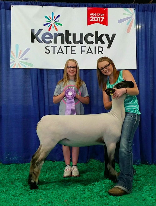Morgan Hauger - Res. Jr. Champion Ewe | KY State Fair