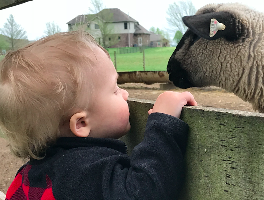 A boy and his sheep!