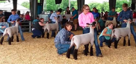 3 Poe Bred Ewes in the Grand Drive - Shown by Coyle & Hauger FamiliesMidwest Junior Preview Show (MO)