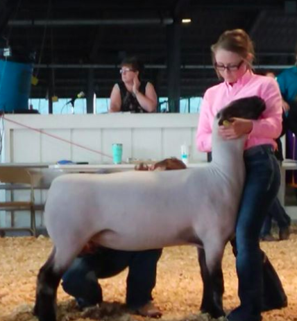 Class Winner 2018 - Midwest Junior Preview Show (MO)Shown by Morgan Hauger