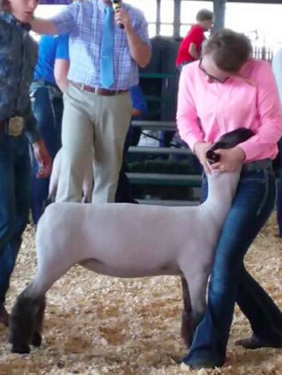 Res. Jr. Champion - Midwest Junior Preview Show (MO)Bred by Hauger Dammed by PoeShown by Morgan Hauger