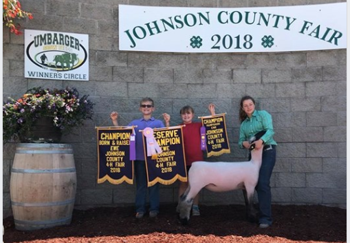 Res. Grand Champion Ewe - Johnson Co. (IN) Shown by Kaitlyn Hicks