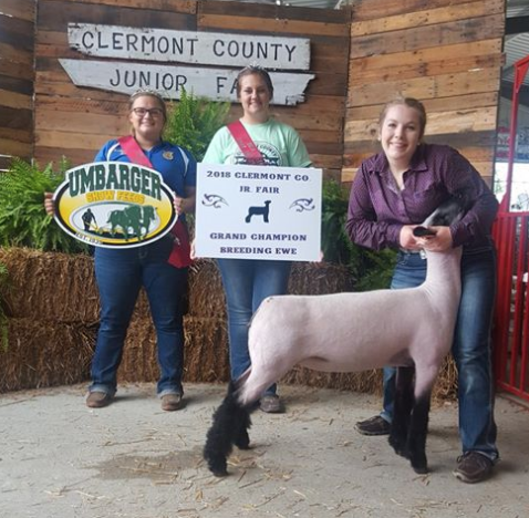 Grand Champion Ewe - Clermont Co. (OH) Shown by Maria Thoms