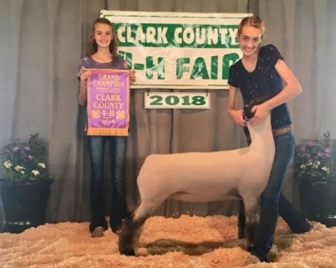 Grand Champion Lamb - Clark Co. (IL) Shown by Kami Titus