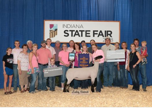 Grand Champion Hampshire Ewe6th Overall - Indiana State Fair 2018Shown by Morgan Hauger